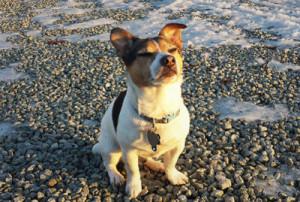 собака дворянской породы