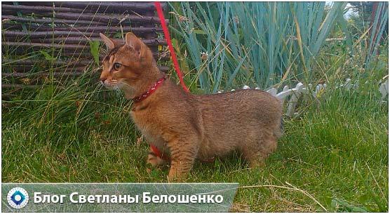 кошка на прогулке на поводке
