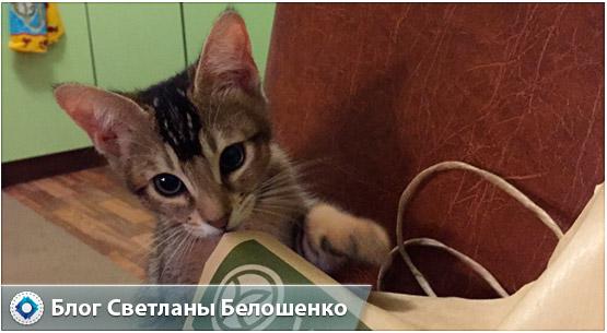 наш котенок