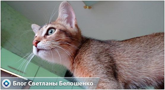 рассказ про кошку