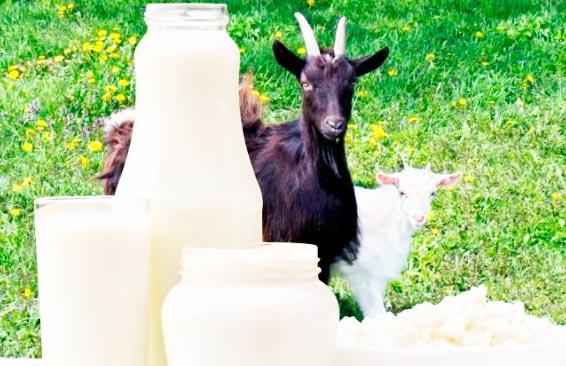 козье молоко для взрослых